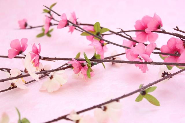 梅の花_2月